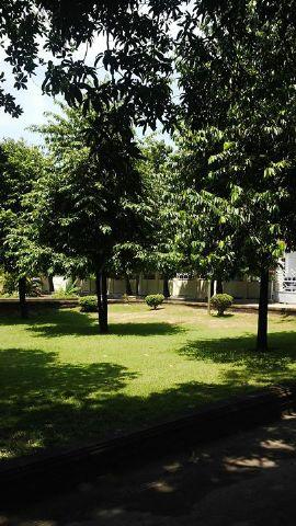 "Pohon Kayu Eboni, di Halaman Rumah Jabatan Gubernuran Sulawesi Tengah ""Siranindi"""