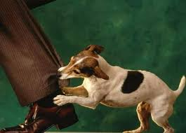Langkah Hukum Jika Diserang Anjing Tetangga